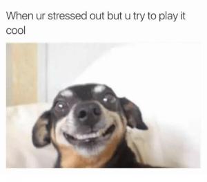 stressedoutdog